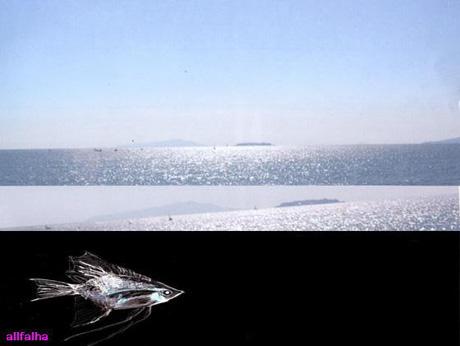 460深海かがやき-1.jpgのコピー.jpg